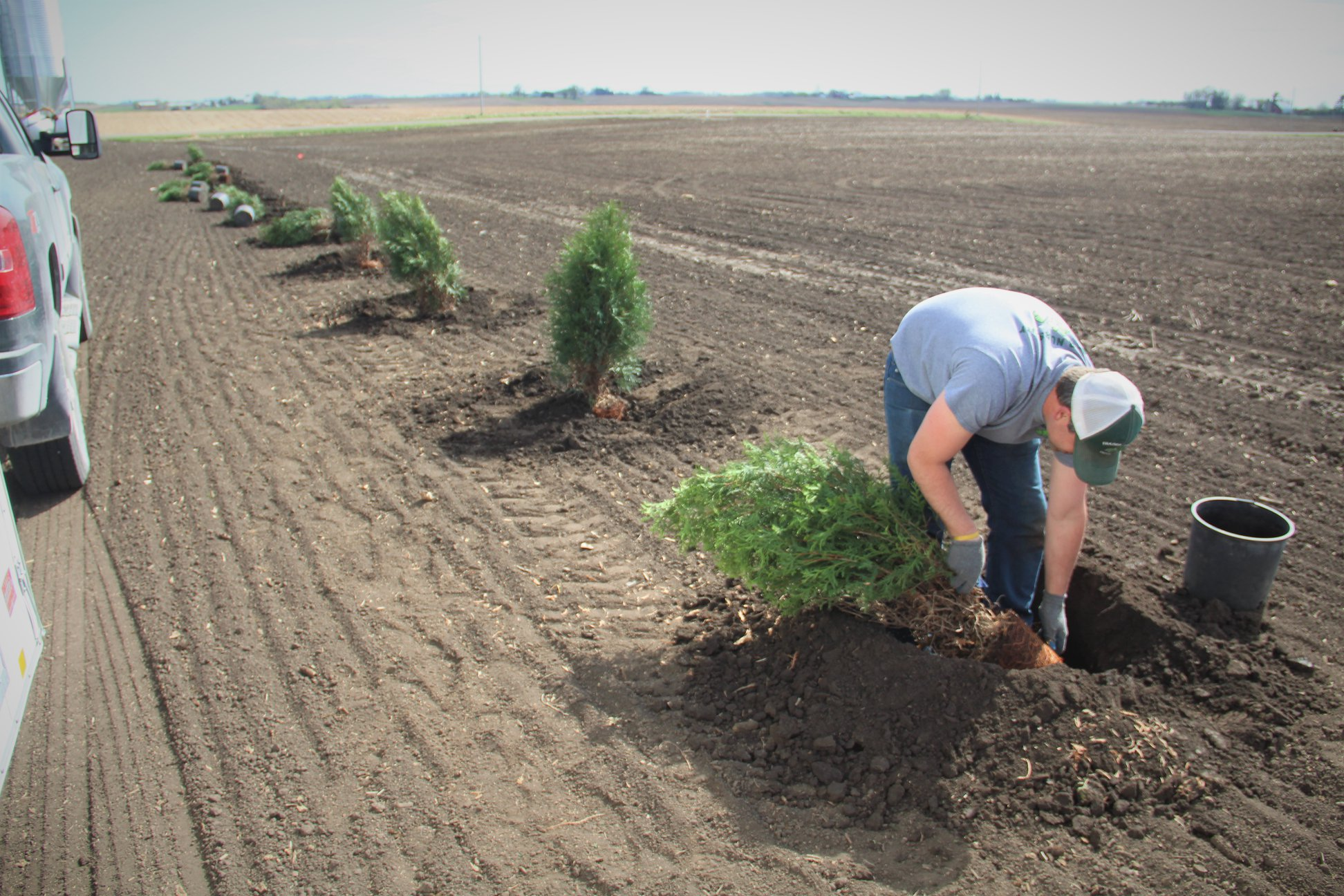 Trees being planted